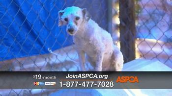 ASPCA TV Spot, 'Hunger Pains' - Thumbnail 8