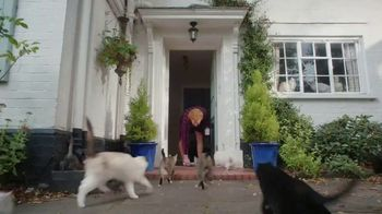 AmeriSave Mortgage TV Spot, 'Mike the Cat Lady Man: Mortgage Rate' - Thumbnail 4