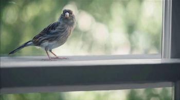 Benjamin Moore TV Spot, 'Bird' - Thumbnail 4