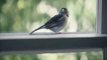 Benjamin Moore TV Spot, 'Bird' - Thumbnail 7