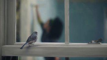 Benjamin Moore TV Spot, 'Bird' - Thumbnail 9