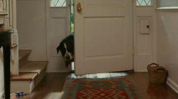 OxiClean Odor Blasters TV Spot, 'Remove Pet Odors' - Thumbnail 1