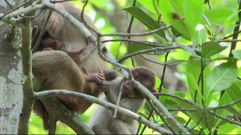 PETA TV Spot, 'Monkeys Belong in Nature, Not in Laboratories' - Thumbnail 1