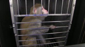 PETA TV Spot, 'Monkeys Belong in Nature, Not in Laboratories' - Thumbnail 2