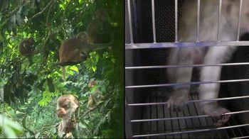 PETA TV Spot, 'Monkeys Belong in Nature, Not in Laboratories' - Thumbnail 4