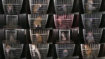 PETA TV Spot, 'Monkeys Belong in Nature, Not in Laboratories' - Thumbnail 5