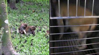 PETA TV Spot, 'Monkeys Belong in Nature, Not in Laboratories' - Thumbnail 6