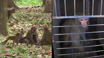 PETA TV Spot, 'Monkeys Belong in Nature, Not in Laboratories' - Thumbnail 7