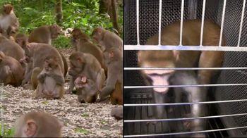 PETA TV Spot, 'Monkeys Belong in Nature, Not in Laboratories' - Thumbnail 8