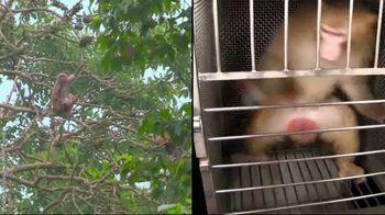 PETA TV Spot, 'Monkeys Belong in Nature, Not in Laboratories' - Thumbnail 9