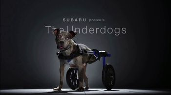 Subaru A Lot to Love Event TV Spot, 'The Underdogs: Heartstrings' [T2] - Thumbnail 1