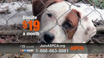 ASPCA Season of Giving TV Spot, 'Join This Holiday Season' Song by Carrie Underwood