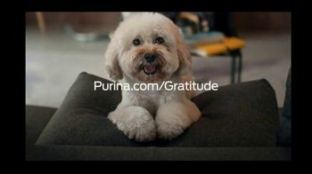 Purina TV Spot, 'Thankful for You' - Thumbnail 8