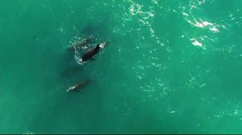 The Beaches of Fort Myers and Sanibel TV Spot, 'Know the Feeling' - Thumbnail 7