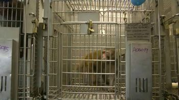PETA TV Spot, 'Primate Research Center' - Thumbnail 2