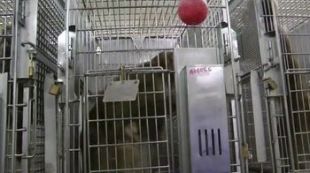 PETA TV Spot, 'Primate Research Center' - Thumbnail 3
