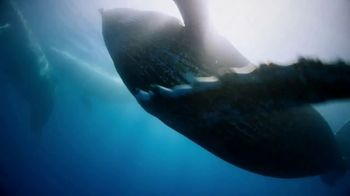 Discovery+ TV Spot, 'Stream What You Love: The Planet' - Thumbnail 3