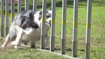 AKC Pet Insurance TV Spot, 'Keep Your Pet Healthy' - Thumbnail 1