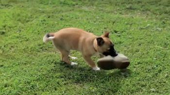 AKC Pet Insurance TV Spot, 'Keep Your Pet Healthy' - Thumbnail 7