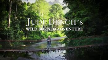 Discovery+ TV Spot, 'Judi Dench's Wild Borneo Adventure' - 41 commercial airings