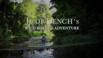 Discovery+ TV Spot, 'Judi Dench's Wild Borneo Adventure' - Thumbnail 7