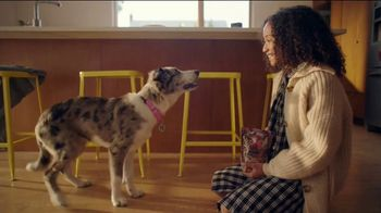 Chewy.com TV Spot, 'The Perfect Treat or Food'