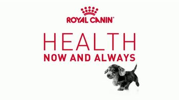 Royal Canin TV Spot, 'Health Now and Always: Strong Bones' - Thumbnail 1