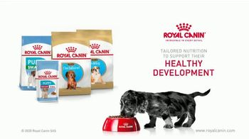 Royal Canin TV Spot, 'Health Now and Always: Strong Bones' - Thumbnail 8