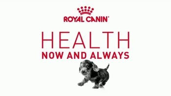 Royal Canin TV Spot, 'Health Now and Always: Strong Bones' - Thumbnail 2