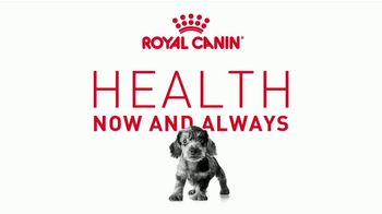 Royal Canin TV Spot, \'Health Now and Always: Strong Bones\'