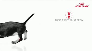 Royal Canin TV Spot, 'Health Now and Always: Strong Bones' - Thumbnail 6