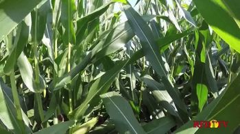 Golden Harvest 610L16 TV Spot, '110 Day Product'