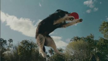 The Nutro Company TV Spot, 'Dogs Give Everything 100%'