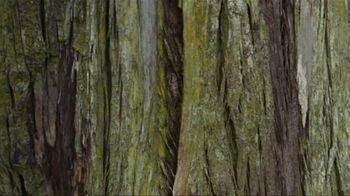 Allbirds TV Spot, 'Tree Dasher' - Thumbnail 1