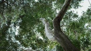 Allbirds TV Spot, 'Tree Dasher' - Thumbnail 3