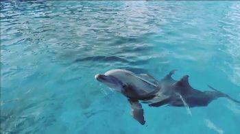 SeaWorld TV Spot, 'Seven Seas Food Festival: 20% Off' - Thumbnail 1