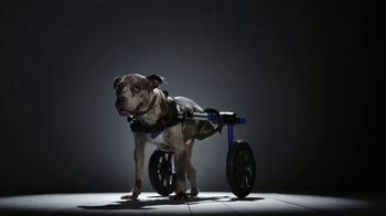 Subaru TV Spot, 'National Make a Dog's Day: The Underdogs: Short End of the Stick' [T1] - Thumbnail 1