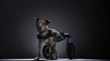 Subaru TV Spot, 'National Make a Dog's Day: The Underdogs: Short End of the Stick' [T1]