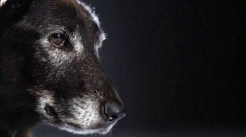 Subaru TV Spot, 'National Make a Dog's Day: The Underdogs: Short End of the Stick' [T1] - Thumbnail 3