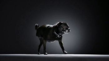 Subaru TV Spot, 'National Make a Dog's Day: The Underdogs: Short End of the Stick' [T1] - Thumbnail 7