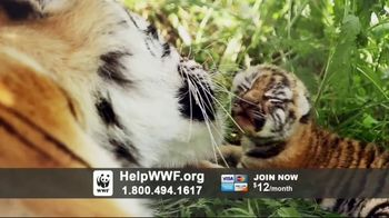World Wildlife Fund TV Spot, 'WWF on TV: Tigers'