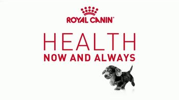 Royal Canin TV Spot, 'Health Now and Always' - Thumbnail 1