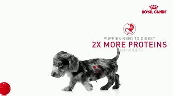 Royal Canin TV Spot, 'Health Now and Always' - Thumbnail 5