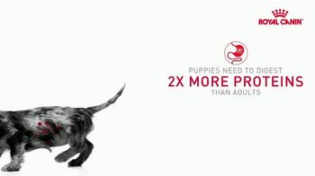 Royal Canin TV Spot, 'Health Now and Always' - Thumbnail 6