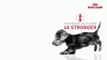 Royal Canin TV Spot, 'Health Now and Always' - Thumbnail 8