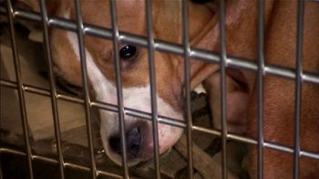 ASPCA TV Spot, 'Every Day in America' Song by Willie Nelson - Thumbnail 3