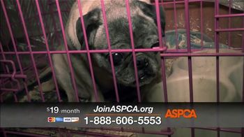 ASPCA TV Spot, 'Every Day in America' Song by Willie Nelson - Thumbnail 4