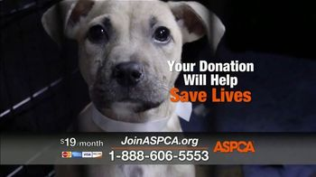 ASPCA TV Spot, 'Every Day in America' Song by Willie Nelson