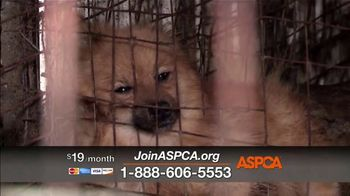 ASPCA TV Spot, 'Every Day in America' Song by Willie Nelson - Thumbnail 7