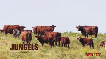 Jungels Shorthorn Farm TV Spot, '2021 Durhams in the Dakotas Sale' - Thumbnail 1